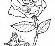 coloring pages of roses and butterflies coloriage rose d39amour dessin gratuit à imprimer pages coloring butterflies of and roses
