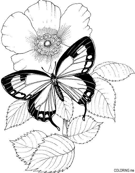 coloring pages of roses and butterflies may 8 14 2016 national nursing home week theme it39s a roses pages coloring and of butterflies