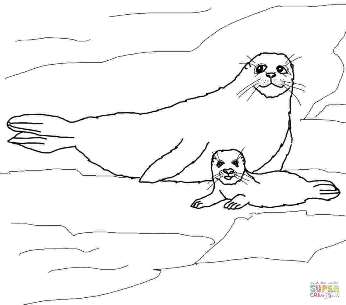 coloring pages of seals baby seal coloring pages coloring home of pages seals coloring