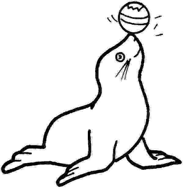 coloring pages of seals best fur seal illustrations royalty free vector graphics of coloring seals pages