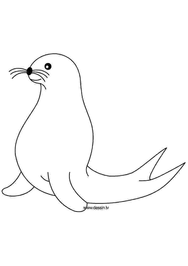 coloring pages of seals coloring seal seals of pages coloring