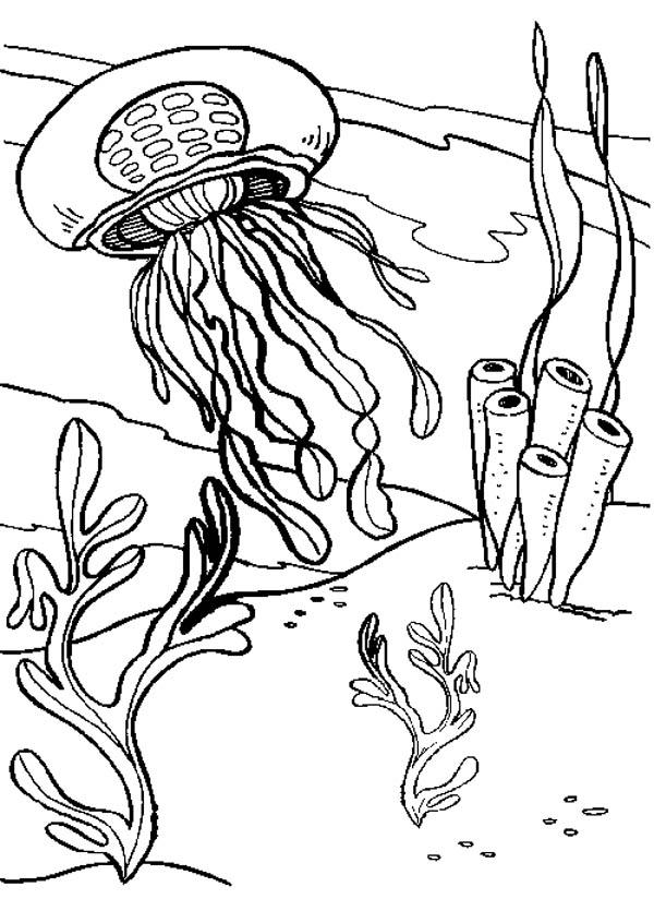 coloring pages of seaweed seaweed coloring pages coloring of seaweed pages