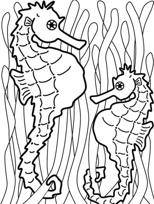 coloring pages of seaweed seaweed coloring pages for mermaid bathroom mural pages coloring seaweed of