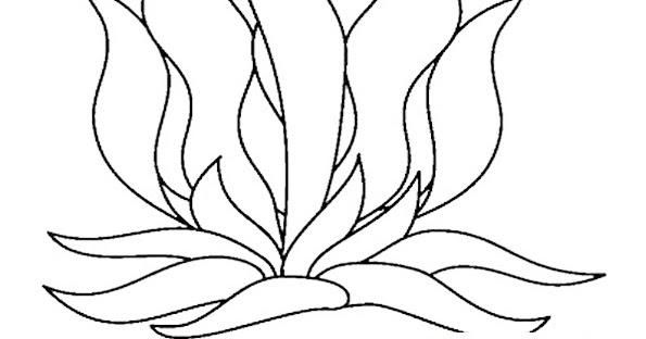 coloring pages of seaweed seaweed coloring pages of coloring pages seaweed