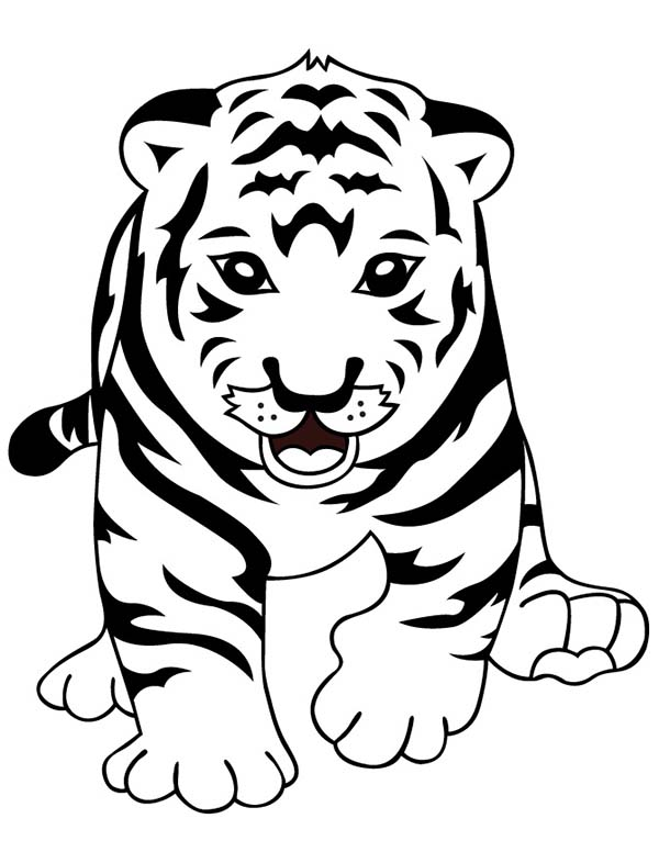 coloring pages tiger cubs a cute roaring of little tiger cub coloring page tiger coloring pages cubs