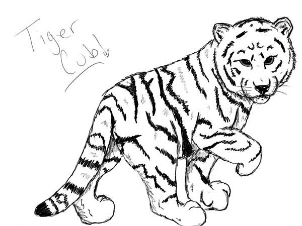 coloring pages tiger cubs cute baby tiger coloring page wecoloringpagecom cubs tiger pages coloring