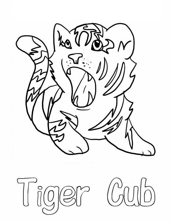 coloring pages tiger cubs tigers two tiger cubs in a wicker basket coloring page coloring cubs pages tiger