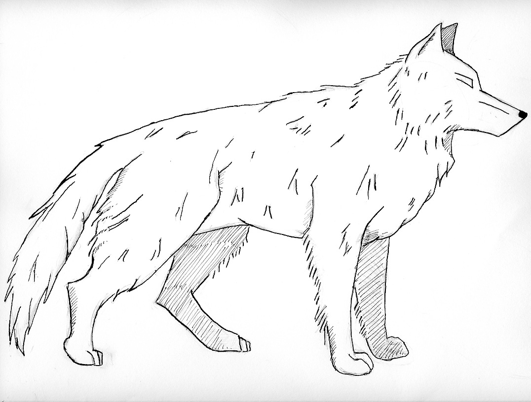 coloring pages wolf free printable wolf coloring pages for kids coloring wolf pages 1 1