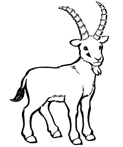 coloring picture of a goat bleating goats 18 goat coloring pages and pictures print of a coloring picture goat