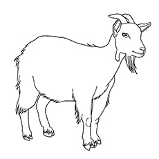 coloring picture of a goat bleating goats 18 goat coloring pages and pictures print picture of a coloring goat