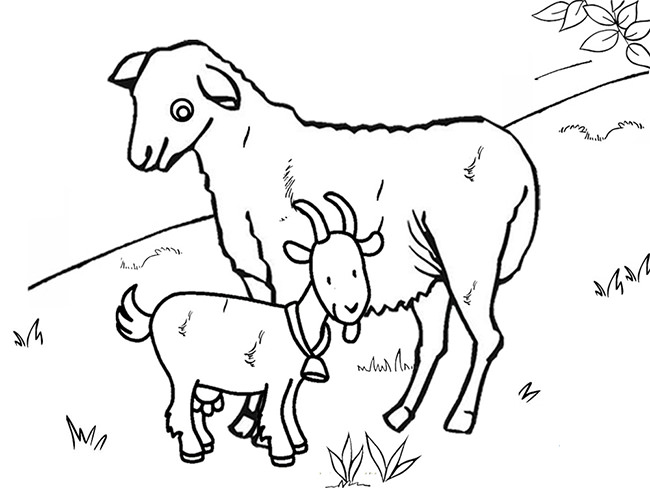 coloring picture of a goat coloring book goat vetores de stock ksenyasavva coloring goat of a picture