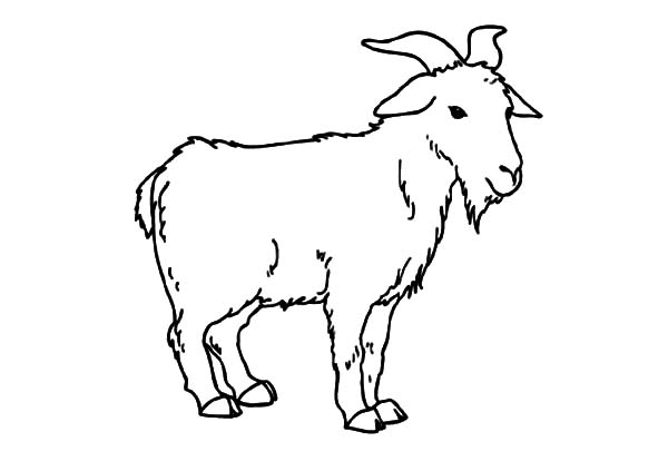 coloring picture of a goat free printable goat coloring pages for kids a goat coloring picture of
