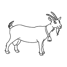 coloring picture of a goat free printable goat coloring pages for kids goat a coloring picture of