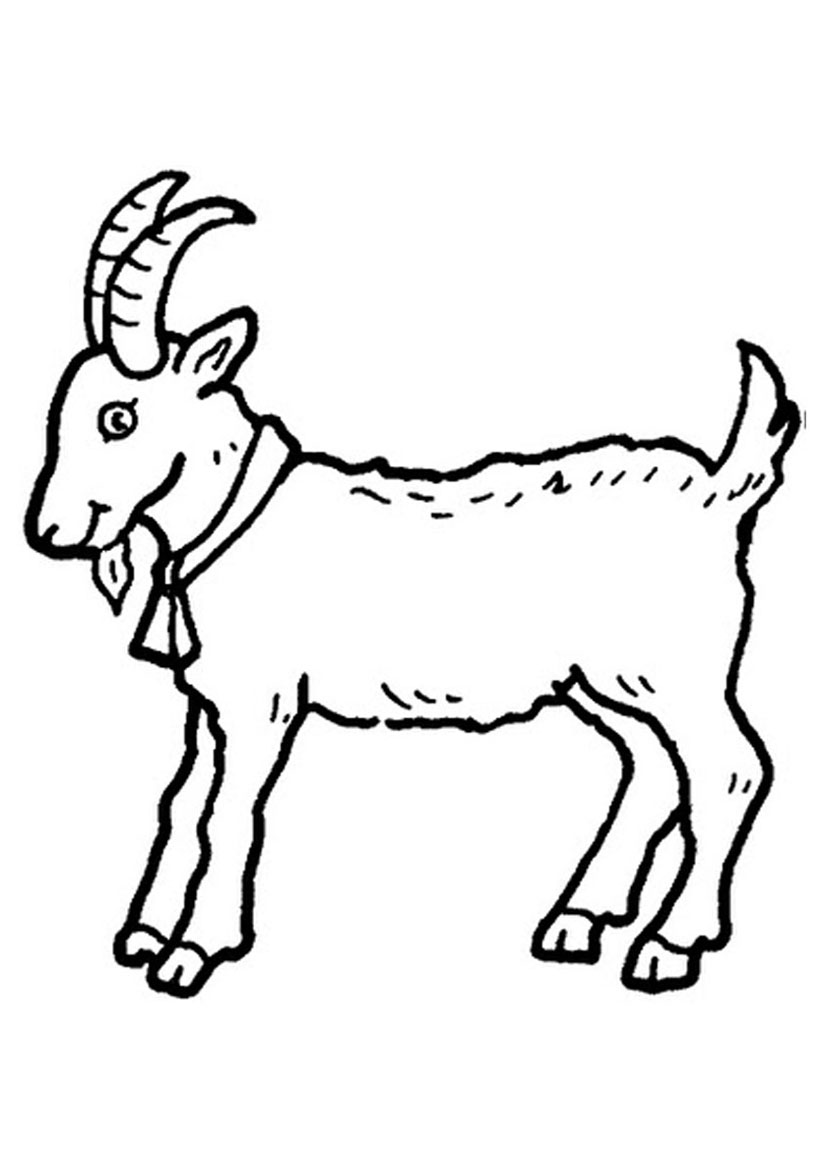 coloring picture of a goat goat drawing pictures at getdrawingscom free for coloring of a picture goat