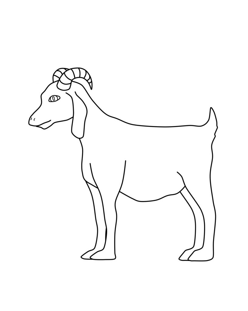 coloring picture of a goat goat sheet clipart clipground a goat of picture coloring