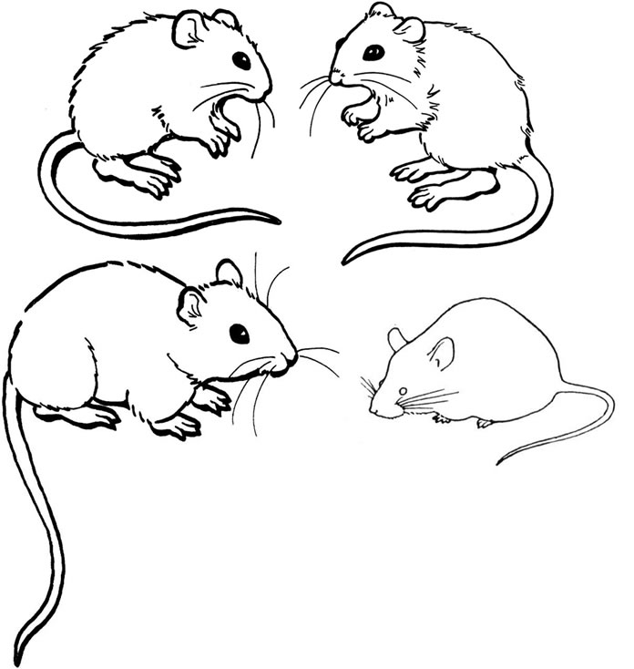 coloring pictures of mice kids n funcom 23 coloring pages of mice pictures mice coloring of