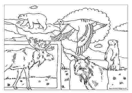 coloring sheet of north america north american animals coloring pages canadian animals north coloring america sheet of