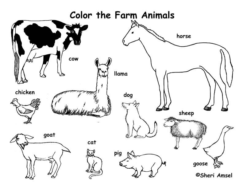 coloring sheets farm animals farm animals coloring pages animals coloring farm sheets