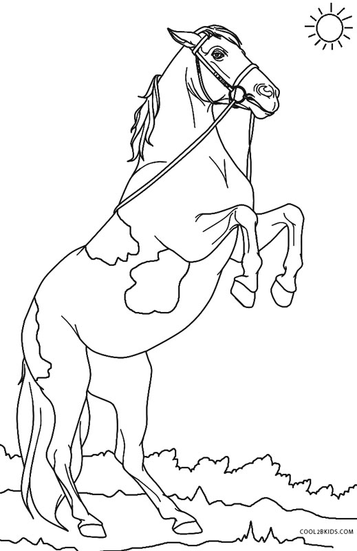 coloring sheets free online top 25 free printable shell coloring pages online sheets coloring online free