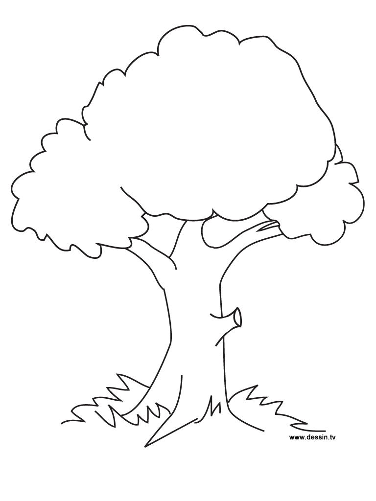 coloring trees coloring for nature and food picture trees coloring