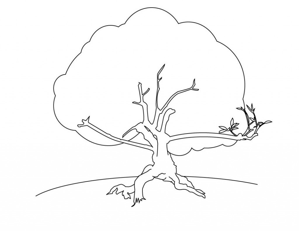 coloring trees free printable tree coloring pages for kids trees coloring 1 4