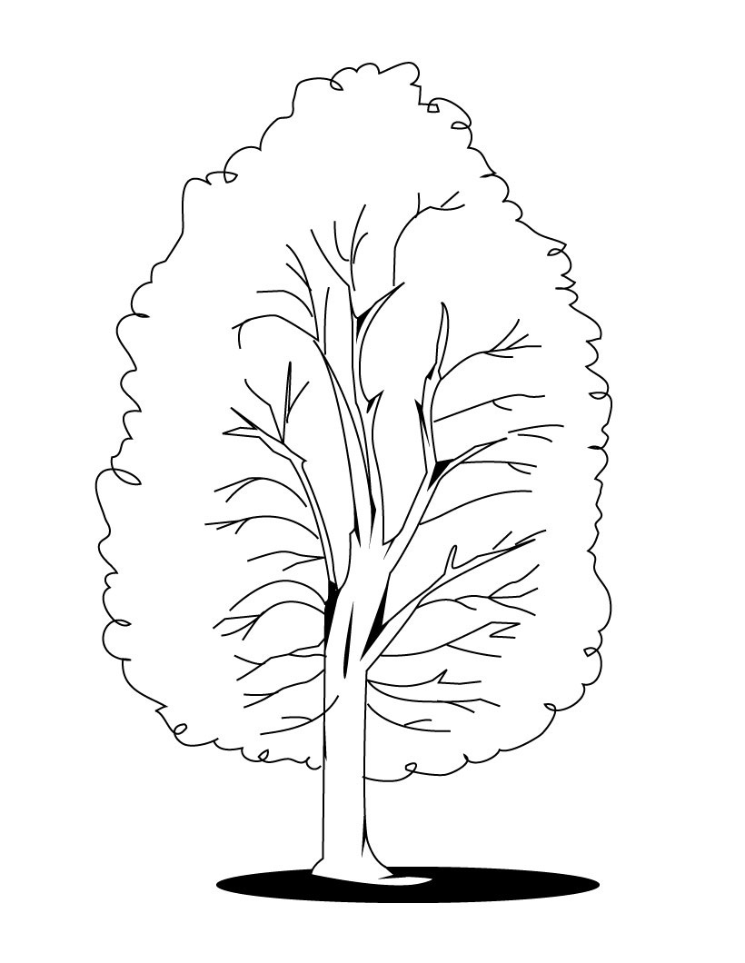 coloring trees how to draw an olive tree 6 steps with pictures wikihow coloring trees