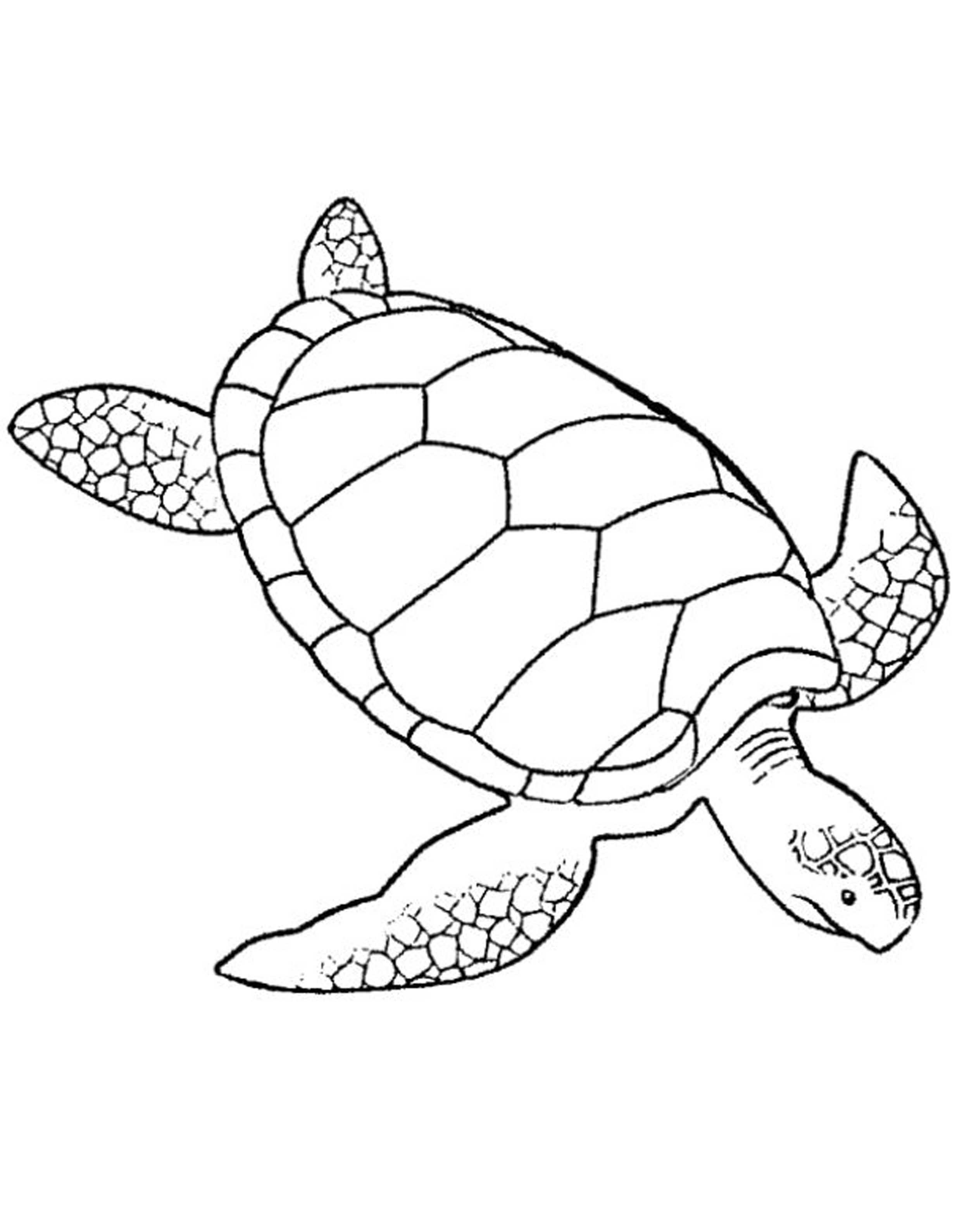 coloring turtles print download turtle coloring pages as the coloring turtles