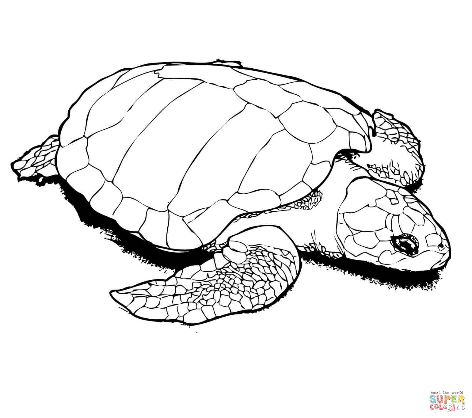coloring turtles sea turtle line drawing at getdrawingscom free for turtles coloring
