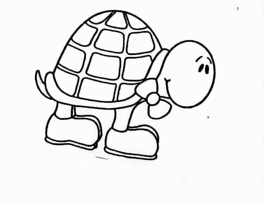 coloring turtles turtle cute animal pages printable for drawing turtles coloring