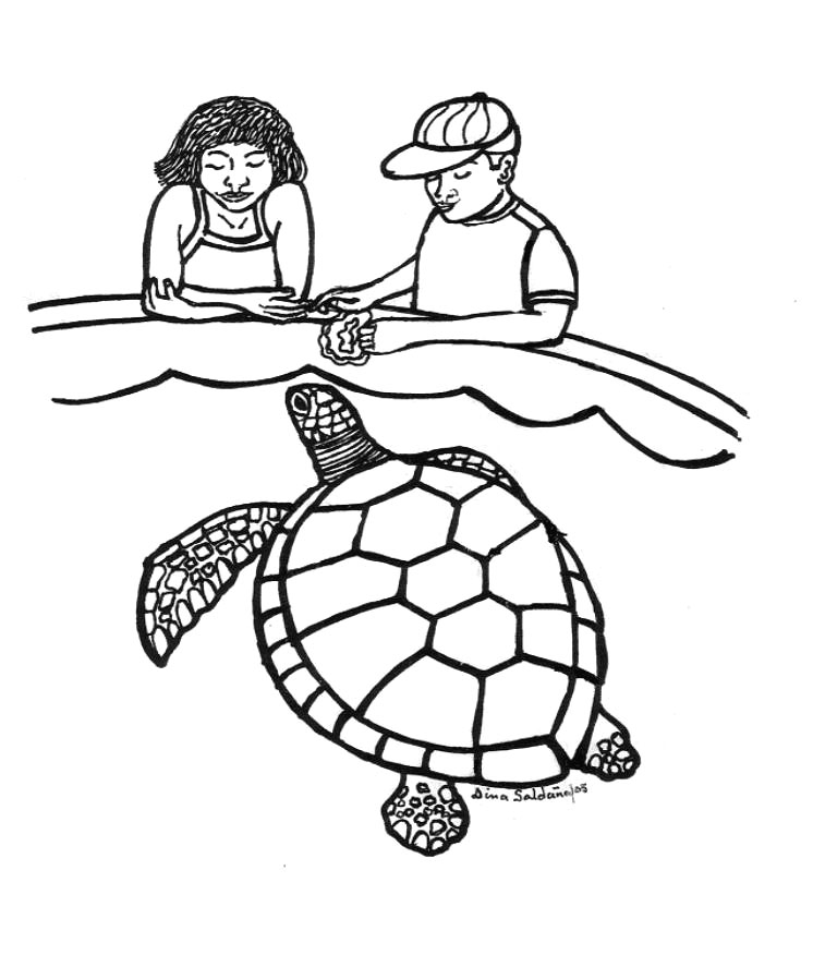 coloring turtles turtle line art clipartsco coloring turtles