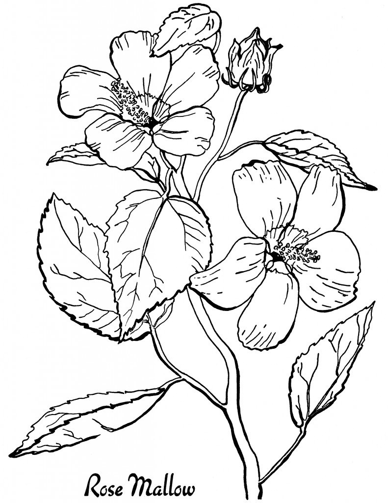 colouring flowers vintage flower coloring pages on behance flowers colouring