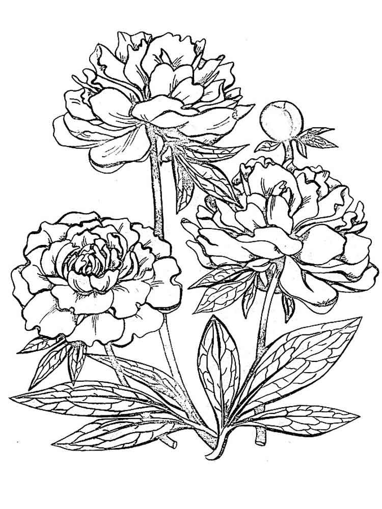 colouring page of flowers flowers to download for free flowers kids coloring pages of flowers page colouring