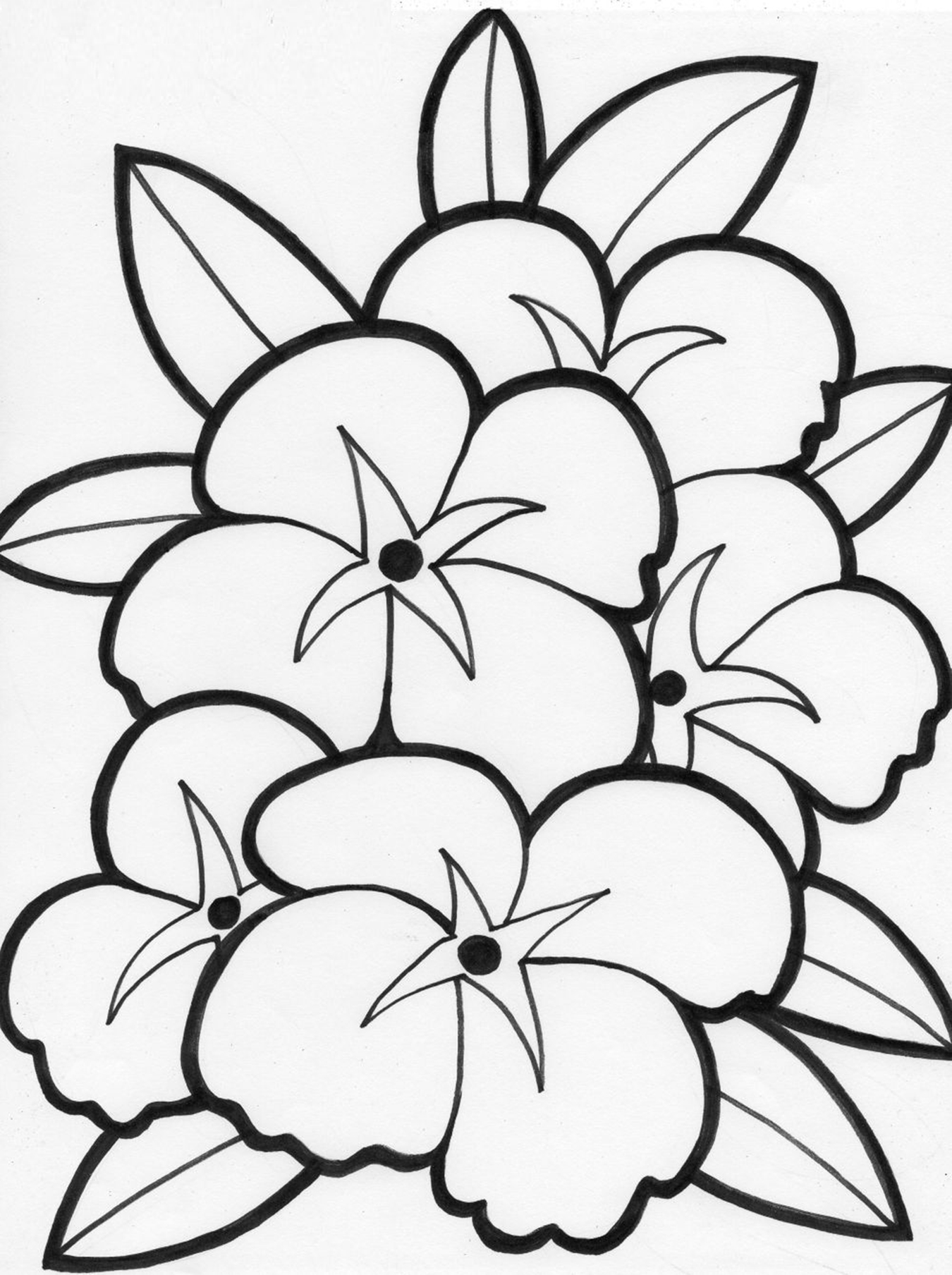colouring page of flowers vintage flower coloring pages on behance of colouring page flowers