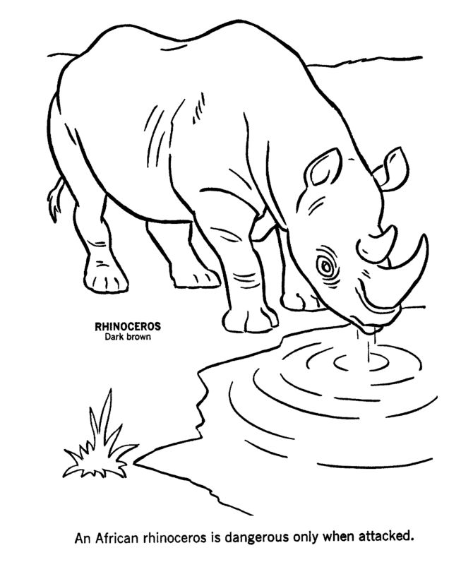 colouring pages big 5 animals 75 best animals coloring pages images on pinterest big pages animals 5 colouring