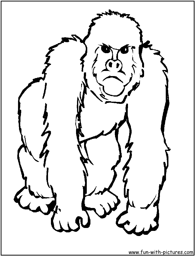 colouring pages big 5 animals african animal printables zoo animal coloring pages colouring 5 pages animals big