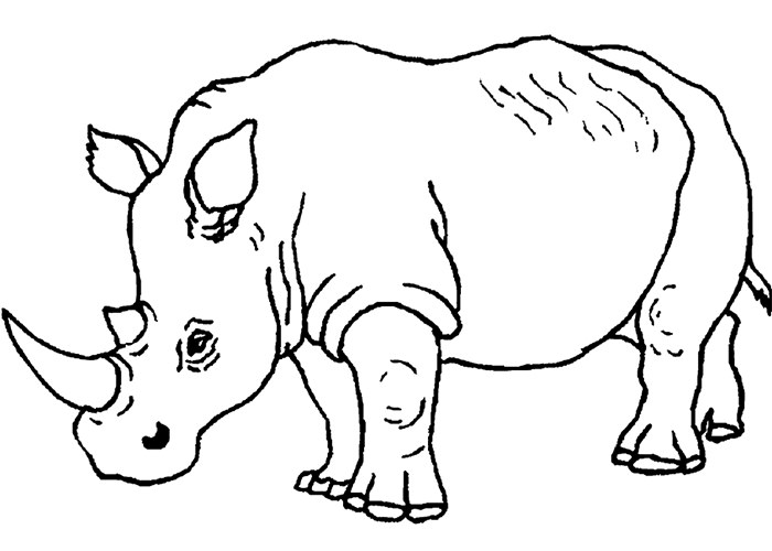 colouring pages big 5 animals african animal template animal templates free big pages 5 colouring animals