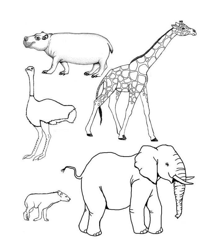 colouring pages big 5 animals african animal template animal templates pages big colouring 5 animals