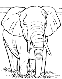 colouring pages big 5 animals african big five colouring pack by screwy lightbulb 5 animals big pages colouring