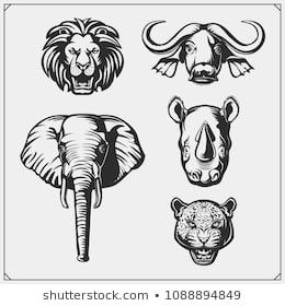 colouring pages big 5 animals chocolate mould big 5 elephant rhino lionbuffalo big animals pages colouring 5