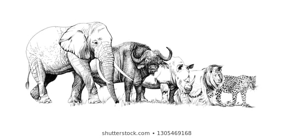 colouring pages big 5 animals the african big five colouring pack big 5 pages animals colouring