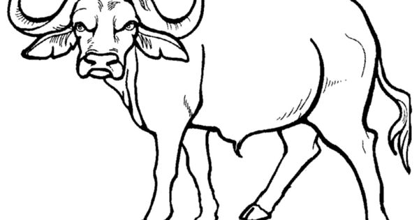 colouring pages big 5 animals wild animal coloring page african buffalo coloring page pages 5 big animals colouring