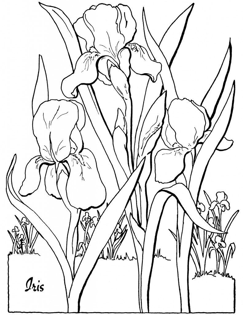 colouring pages for adults online free summer day printable adult coloring page from favoreads etsy for adults colouring online pages free
