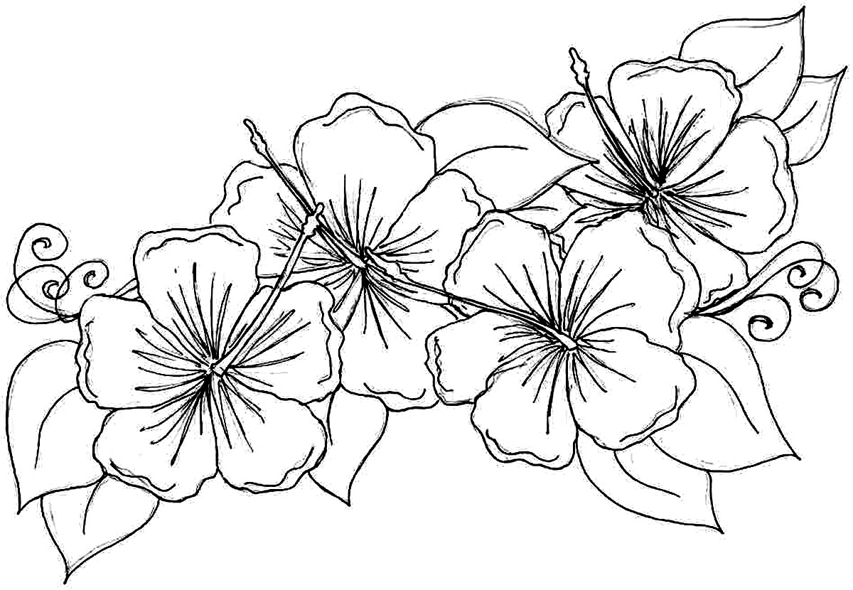colouring pages hibiscus flower beautiful red hibiscus flower colouring pages picolour hibiscus flower colouring pages