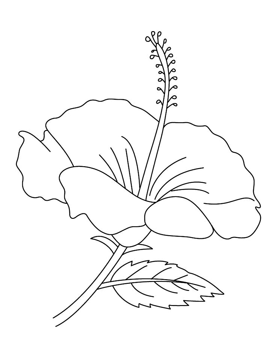 colouring pages hibiscus flower free printable hibiscus coloring pages for kids colouring flower pages hibiscus