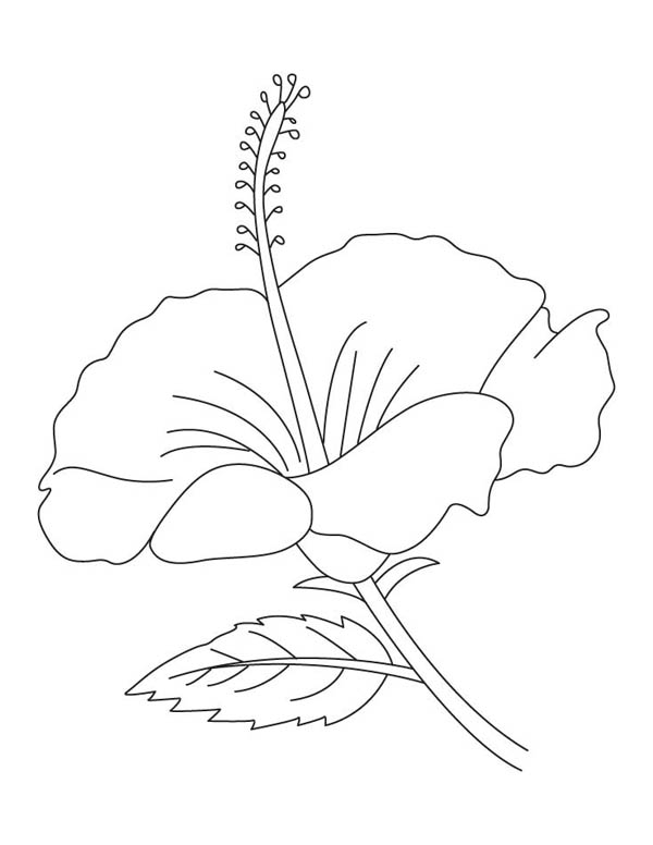 colouring pages hibiscus flower free printable hibiscus coloring pages for kids colouring pages hibiscus flower