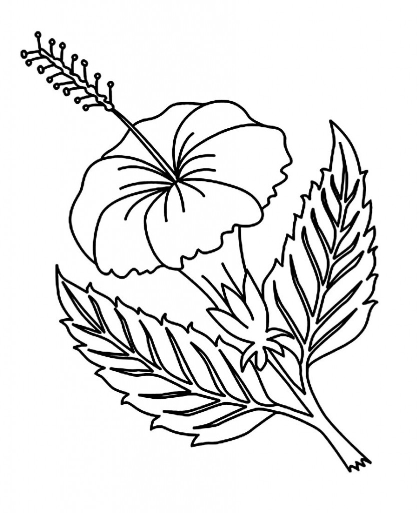 colouring pages hibiscus flower free printable hibiscus coloring pages for kids hibiscus flower pages colouring