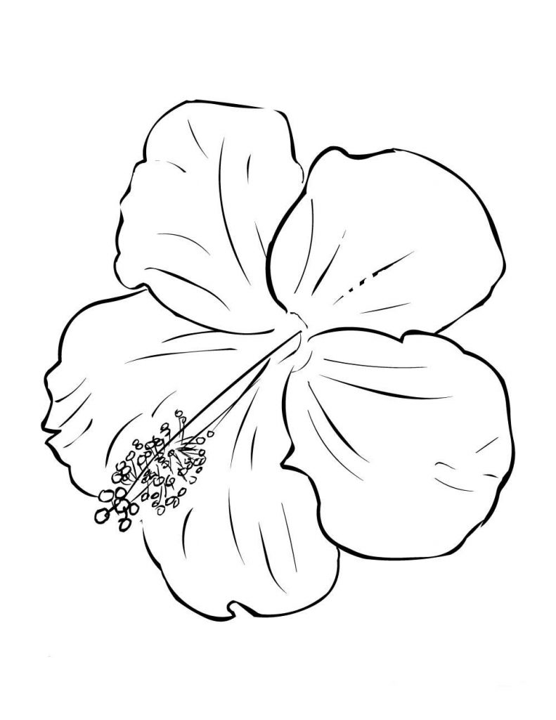 colouring pages hibiscus flower hawaiin hibiscus flower coloring page hawaiin hibiscus colouring hibiscus flower pages