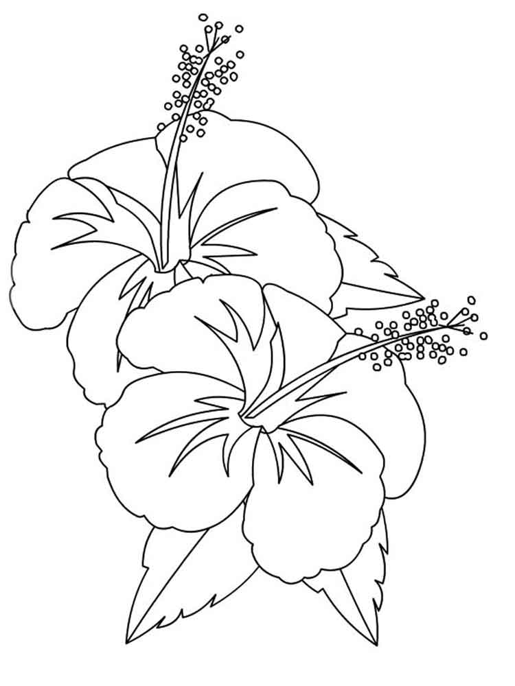 colouring pages hibiscus flower hibiscus flower coloring page color luna hibiscus pages colouring flower