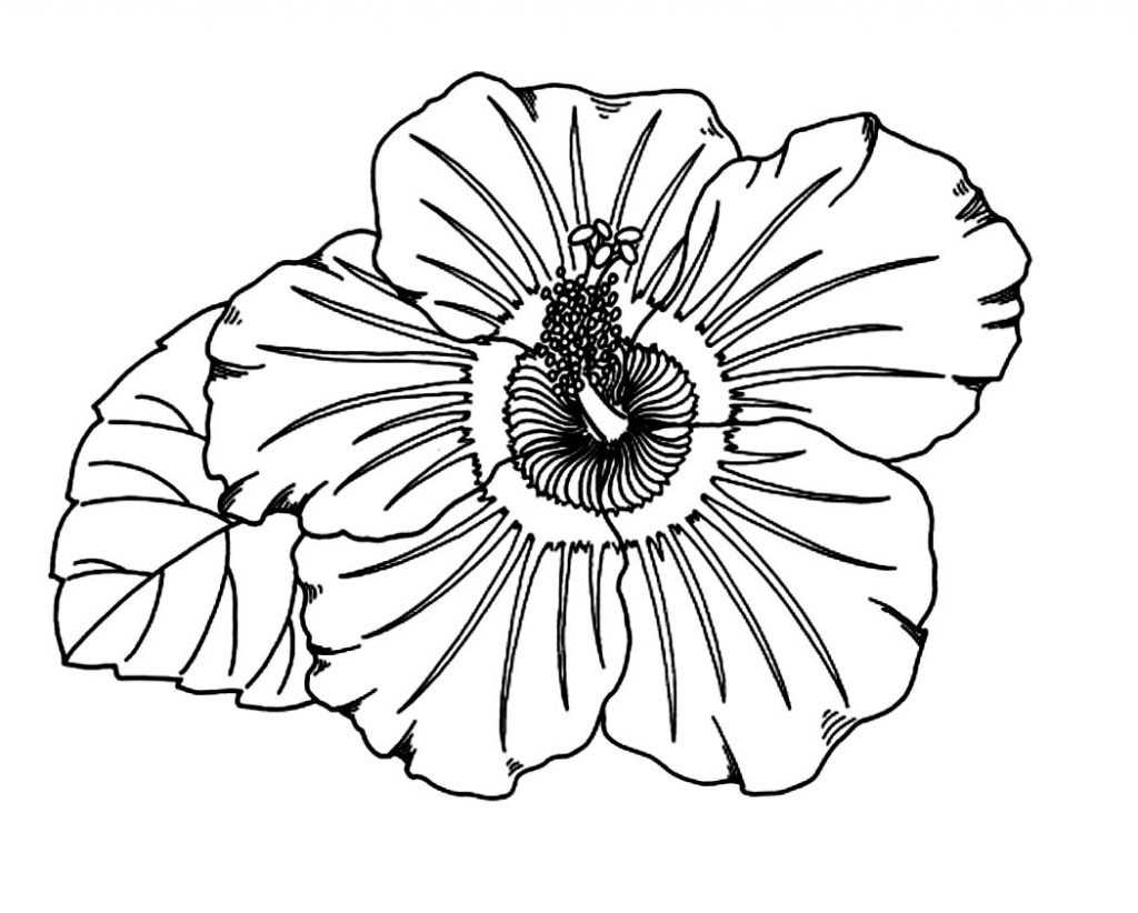 colouring pages hibiscus flower hibiscus flower coloring page supercoloringcom pages flower colouring hibiscus
