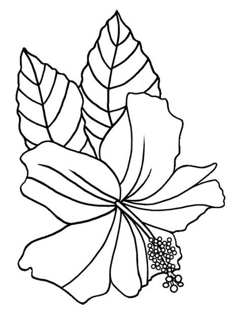 colouring pages hibiscus flower hibiscus flower coloring pages download and print colouring pages flower hibiscus
